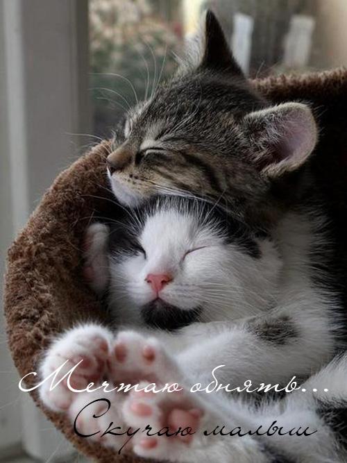Мечтаю обнять... Скучаю малыш