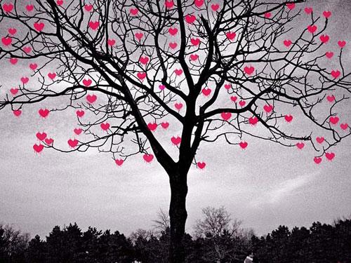 Древо влюбленных