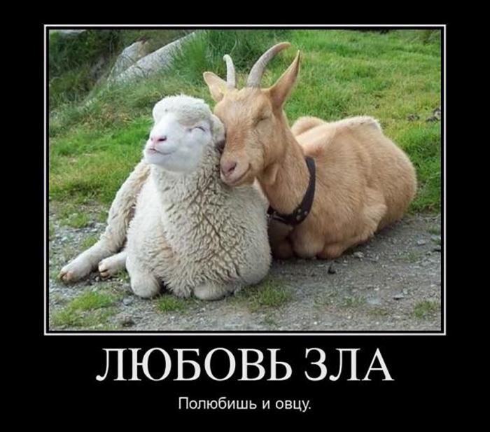Анекдот Про Черную И Белую Овцу
