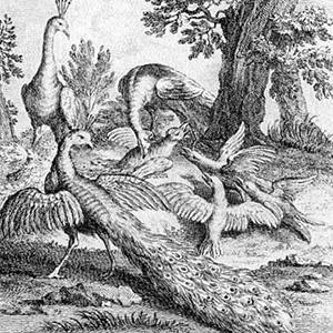 Ворона в павлиньих перьях - Жан де Лафонтен