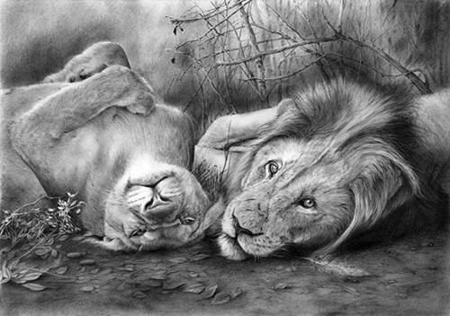 Львиная любовь и нежность