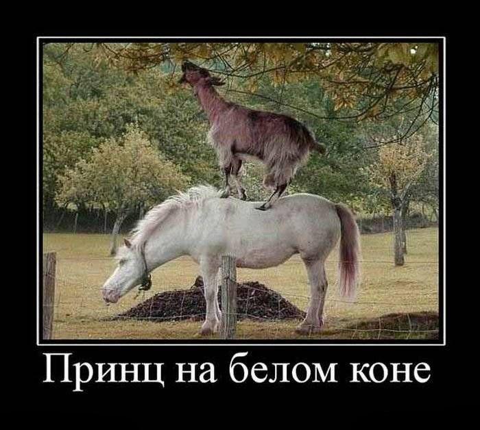 Принц на белом коне - прикольная картинка