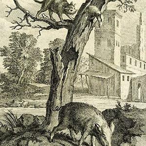 Орел, Дикая Свинья и Кошка - Жан де Лафонтен