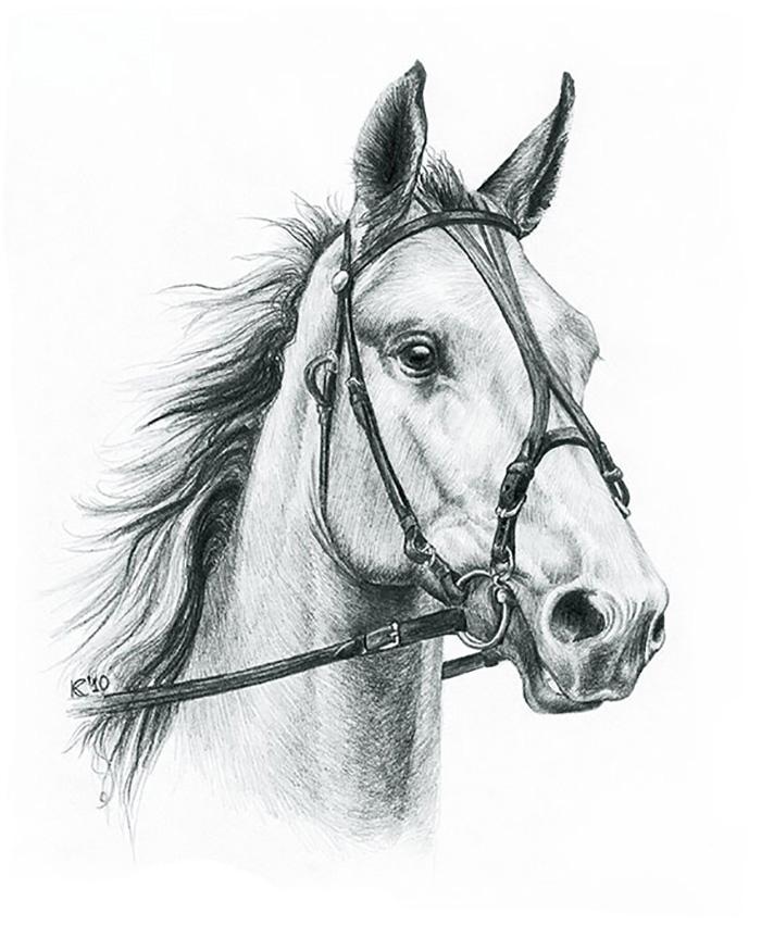 Рисунки для срисовки карандашом лошади