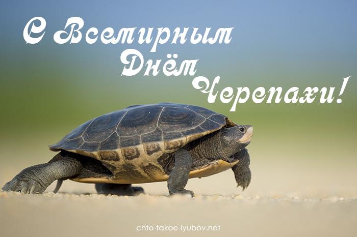 С Всемирным днём черепахи