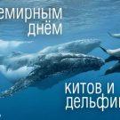 С Всемирным днём китов и дельфинов! - картинки