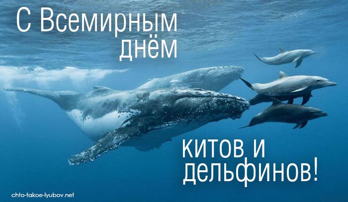 С Всемирным днём китов и дельфинов