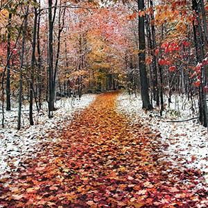 Загадки про ноябрь