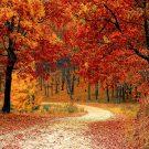 Загадки про октябрь