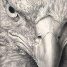 Рисунки Орел