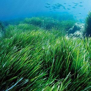 Стихи про водоросли