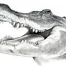 Рисунки Крокодил