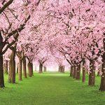 Яблони в цвету - стихи