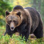 Загадки о медведе