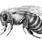 Рисунки Пчела
