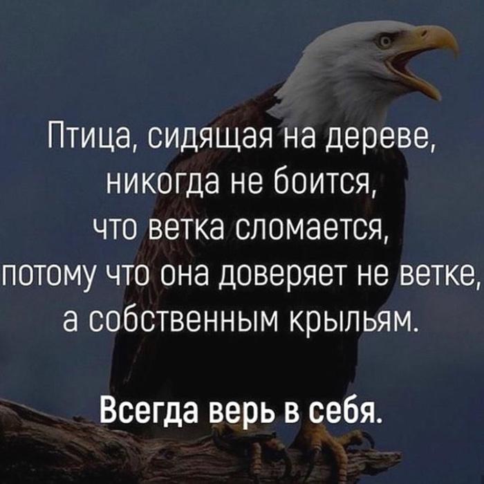 Птица, сидящая на дереве, никогда не боится,... Всегда верь в себя.