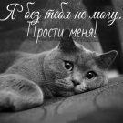 Я без тебя не могу... Прости меня!