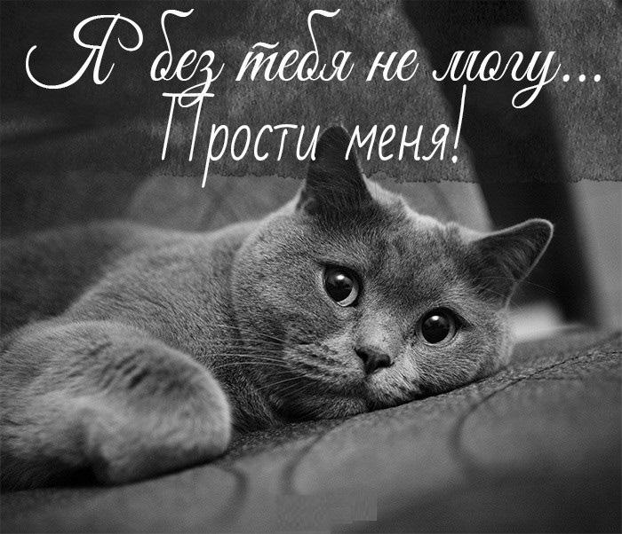 Я без тебя не могу... Прости меня