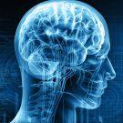 Мозг и возраст
