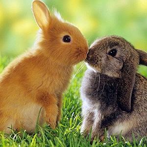 Не обижай животных - стихи