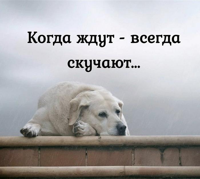 Когда ждут - всегда скучают...