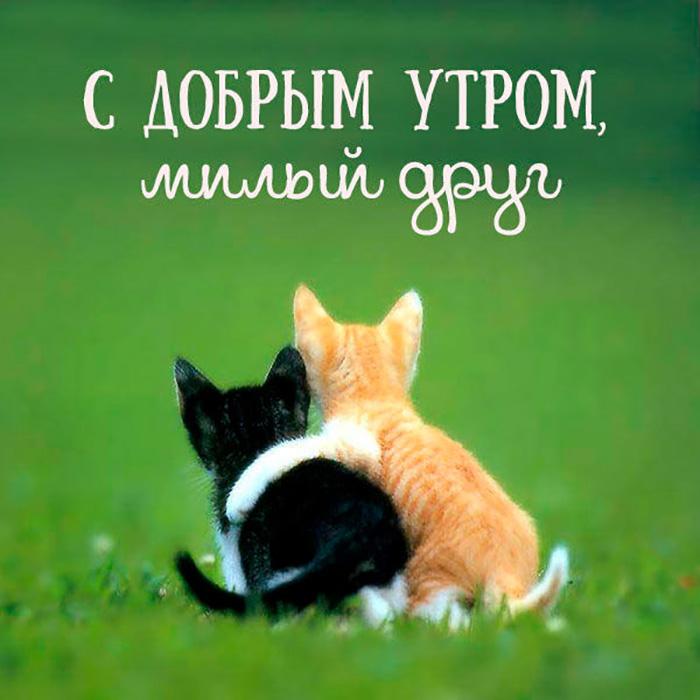 С Добрым утром, милый друг