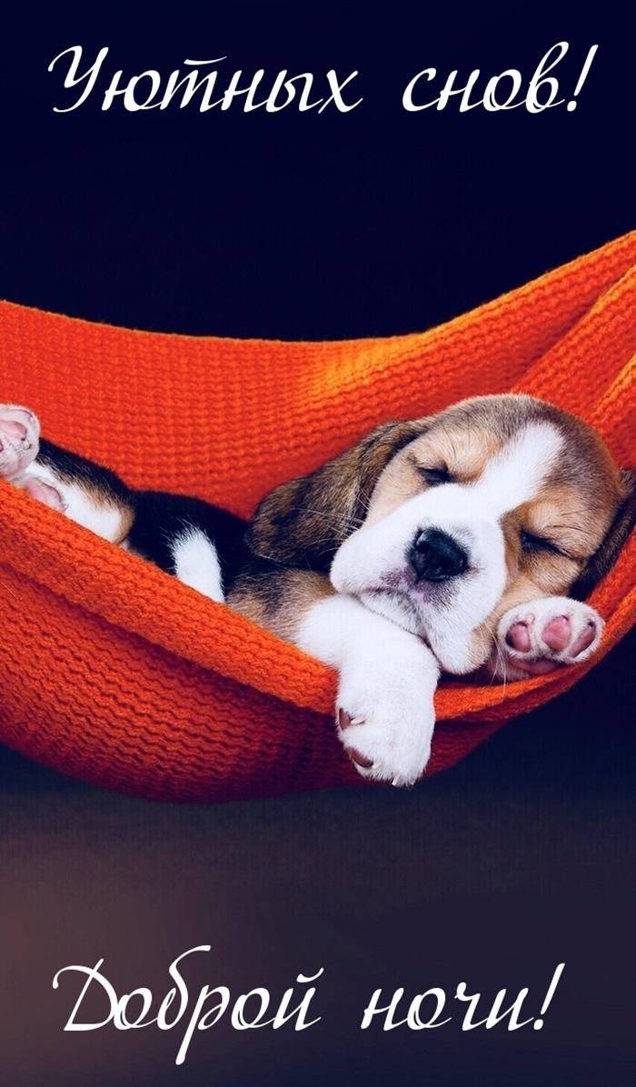 Уютных снов! Доброй ночи!