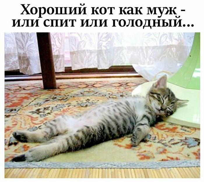 Хороший кот как муж - или спит или голодный...